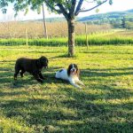 Villa Perigord is Dog Friendly